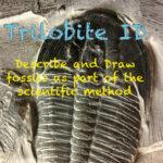 Trilobite ID